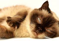 Quali sono i vantaggi degli alberi tiragraffi per gatti